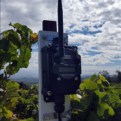 Banner Wireless Connects Wine Maker With Environmental Data From Vineyard